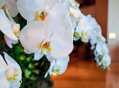 White orchids in an office setting